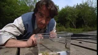 Documentaire C'est pas sorcier –  Ecologie d'une mare