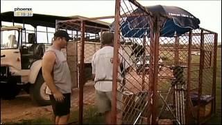 Documentaire Kevin Richardson, le langage des fauves
