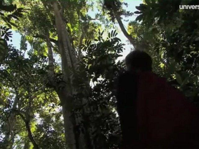Documentaire Secrets de plantes – L'ortie, vers un jardin sauvage