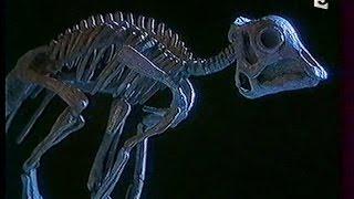 Documentaire Les bébés dinosaures