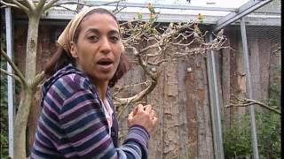 Documentaire C'est pas sorcier – Perroquets