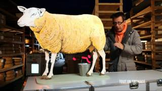 Documentaire C'est pas sorcier – Tout un fromage