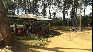Documentaire C'est pas sorcier – Café : les sorciers veillent au grain