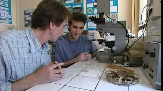 Documentaire C'est pas sorcier – Termites
