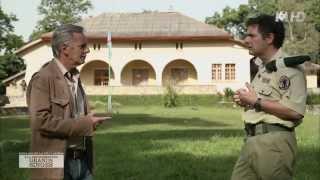 Documentaire A la découverte des grands singes