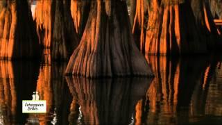 Documentaire Échappées belles – Louisiane : le sud des Etats-Unis