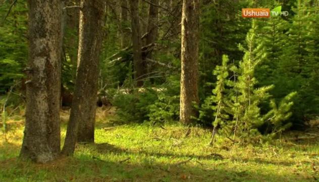 Documentaire Planète Terre, aux origines de la Vie – Yellowstone