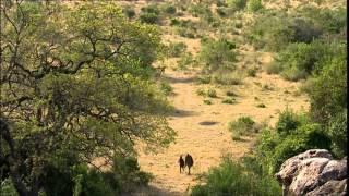 Documentaire Une journée en brousse