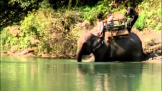 Documentaire Sur la piste du tigre au Népal – Le tigre du Bengale