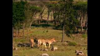 Documentaire Drôles de zèbres