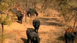 Documentaire Sur la piste des lions de l'Inde