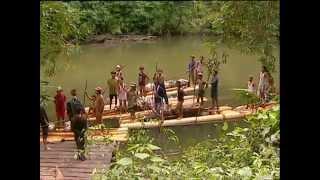 Documentaire Mission Kalaweit – Orangs-outans & gibbons d'Indonésie