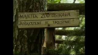 Documentaire Le voyage du lynx, libre dans les Vosges