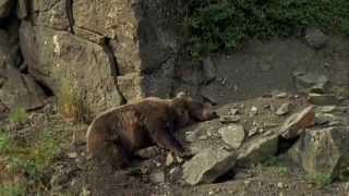 Documentaire Les animaux du froid – Les animaux de la taïga