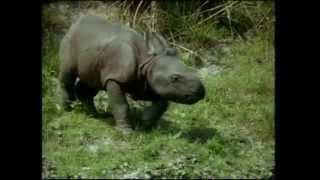 Documentaire Une histoire de rhinocéros – Le voyage initiatique de Bachada