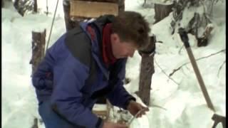 Documentaire Le glouton dans les montagnes rocheuses au Canada
