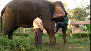Documentaire L'enfant cornac – Népal, le guide de l'éléphant