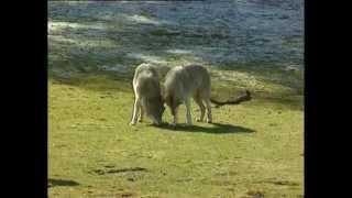 Documentaire Fille de loups