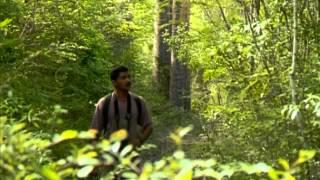 Documentaire Métier pisteur, les lémuriens à Madagascar