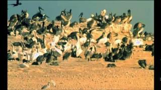 Documentaire Le rendez-vous des oiseaux, le Banc d'Arguin