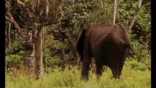 Documentaire La plage des éléphants, Gamba