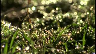 Documentaire Le gnou dans le parc de Serengeti
