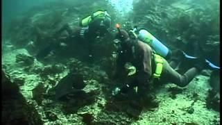 Documentaire La pieuvre