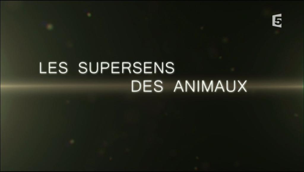 Documentaire Les supersens des animaux – L'ouïe