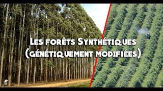 Documentaire Forêts artificielles, les dangers des arbres génétiquement modifiés
