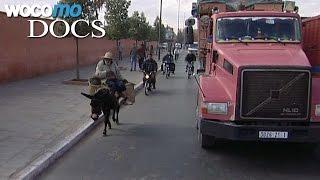 Documentaire Marrakech au petit trot