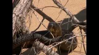 Documentaire Reptiles et cobras dans le désert