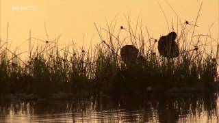 Documentaire Un matin sur Terre