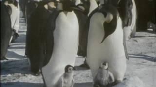 Documentaire L'univers des glaces