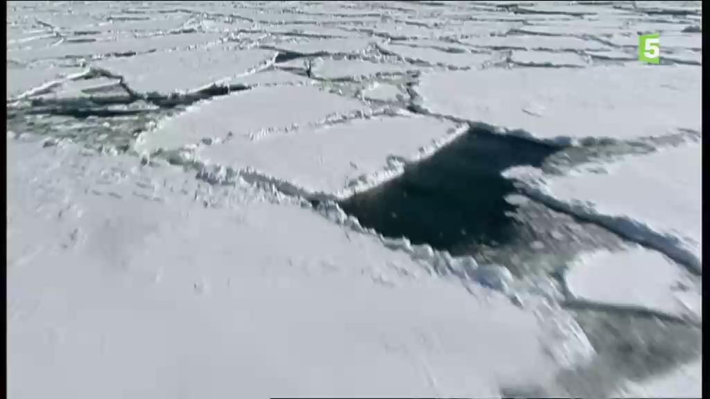 Documentaire Au cœur du paradis blanc – Le chant des baleines