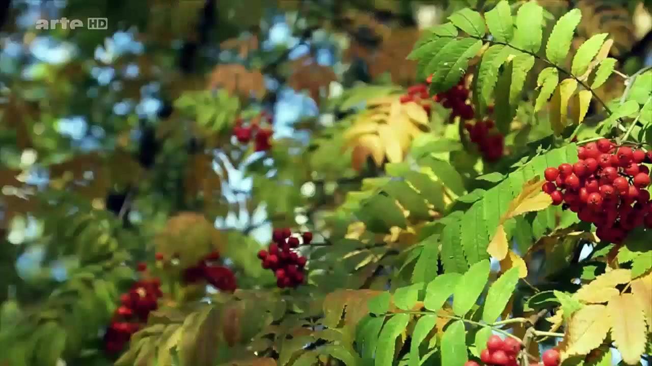 Documentaire Au gré des saisons – Automne