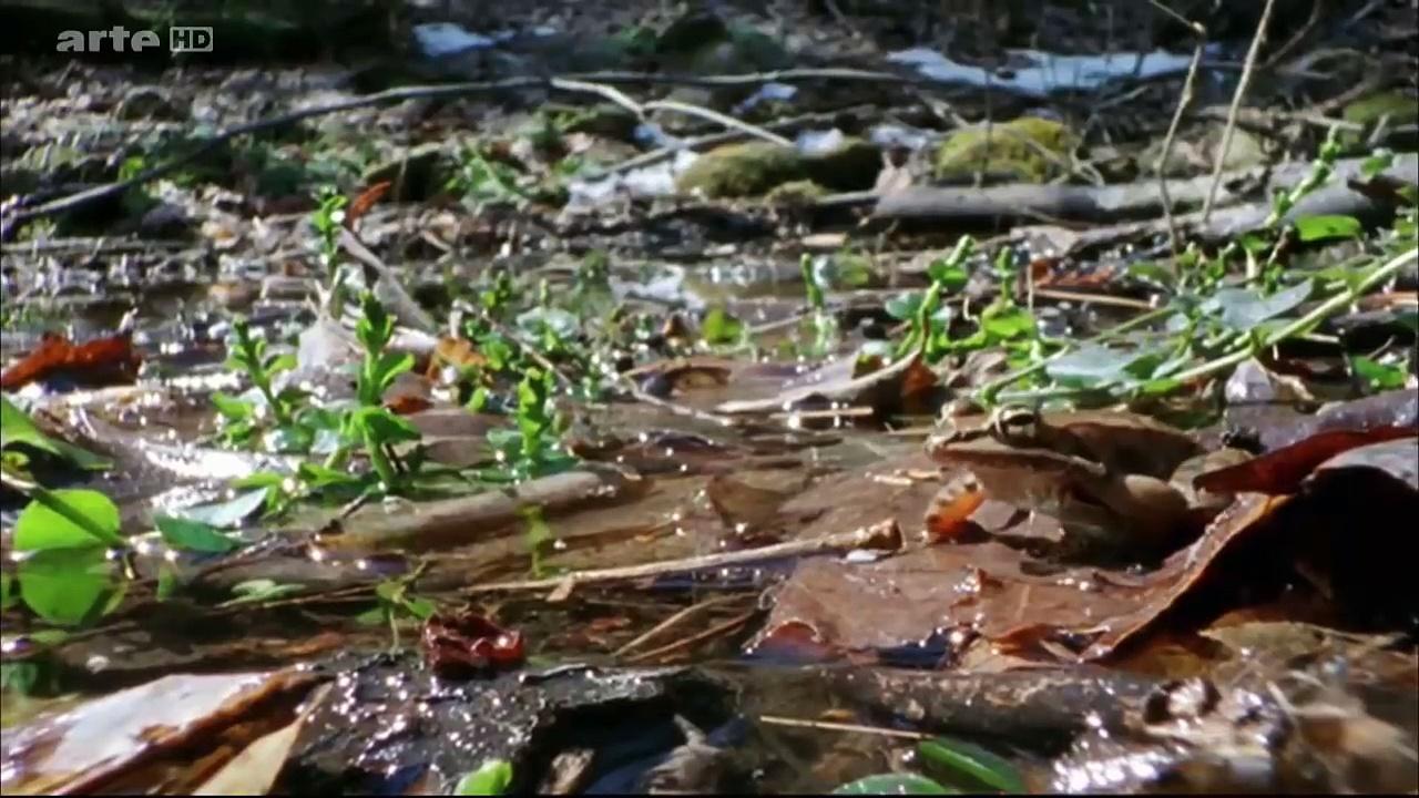 Documentaire Drôles de grenouilles
