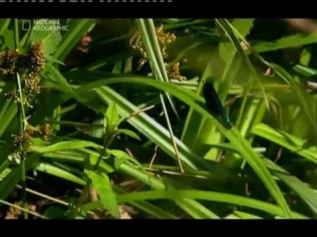 Documentaire La Russie à l'état sauvage – Les vallées primaires de l'oural