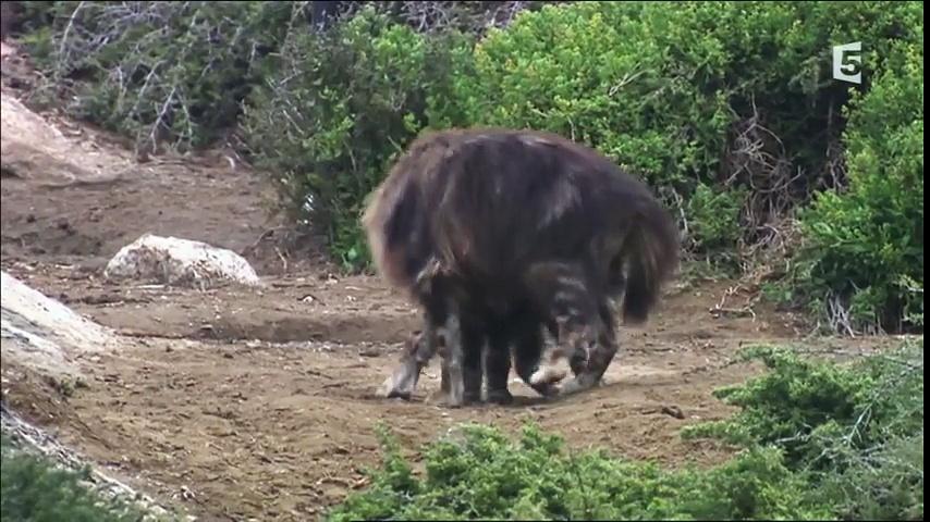 Documentaire La hyène du Namib