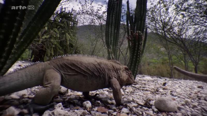Documentaire Les Caraïbes –  L'odyssée des crocodiles