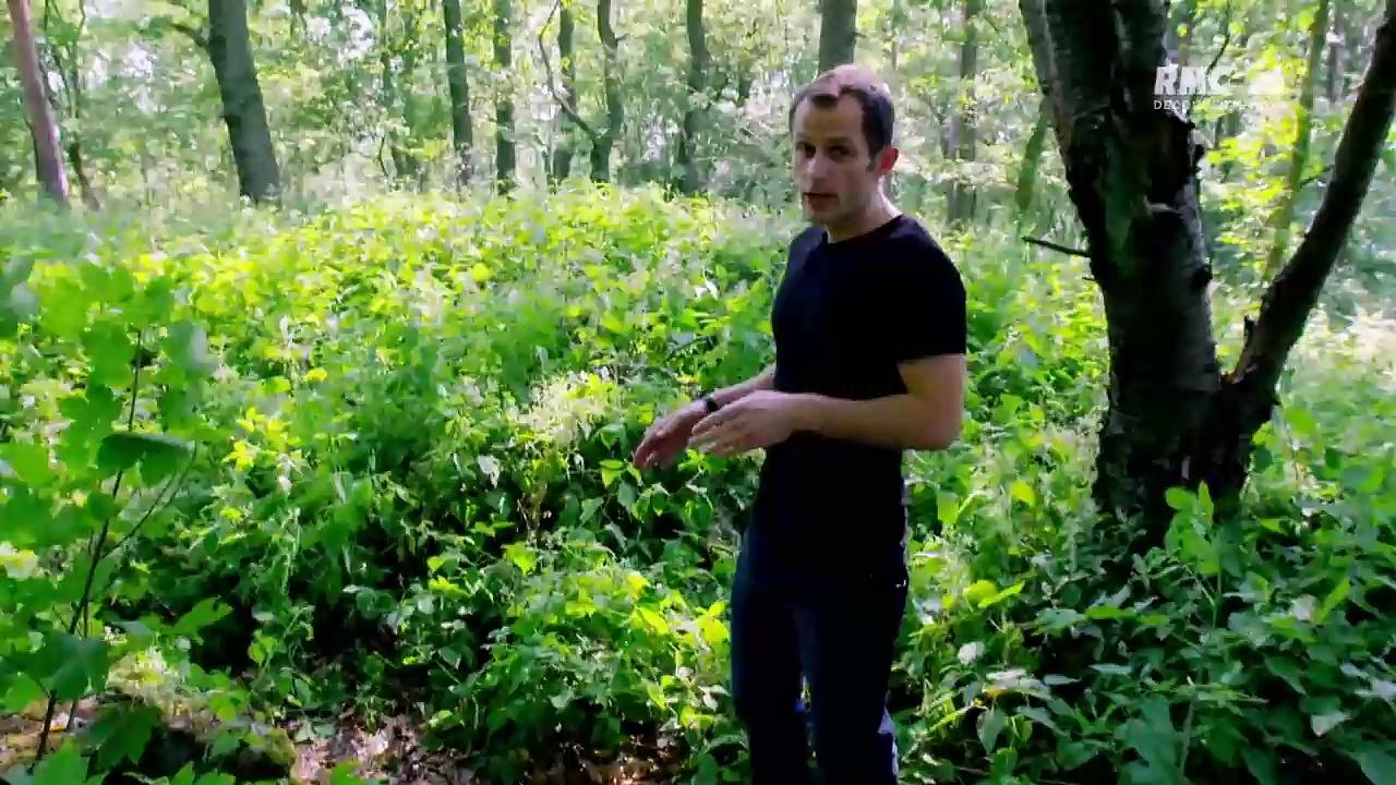 Documentaire La tanière du loup