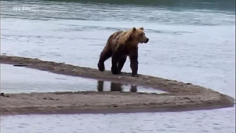 Documentaire Saumons, ours, parades nuptiales – Chez les Itelmènes de Kamtchatka