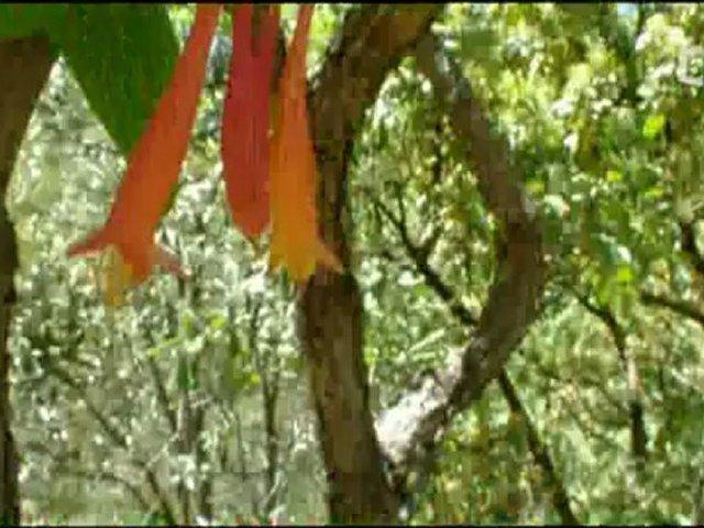 Documentaire Suprenants colibris