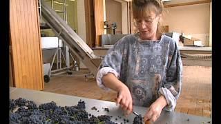Documentaire La route des vins – Bourgogne