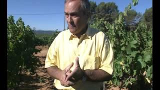 Documentaire La route des vins – Provence