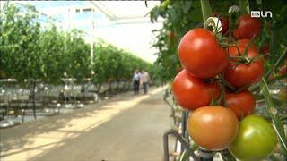 Documentaire Fruits et légumes trop pauvres en micronutriments : attention carences !