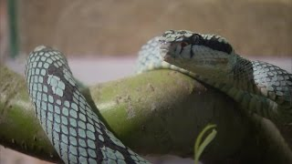 Documentaire Poisons, venins, toxines: les animaux qui soignent