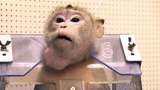 Documentaire Faut-il encore faire des tests sur les animaux?