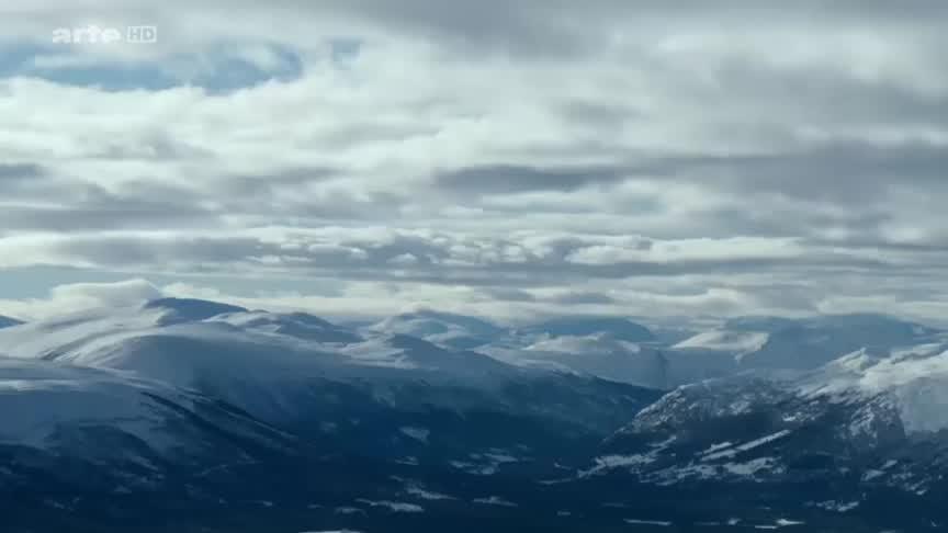 Documentaire Scandinavie – l'appel de la nature (3/5) Le boeuf musqué