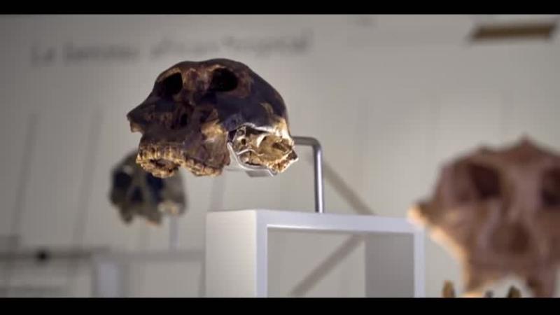 Documentaire Sur les traces du premier homme