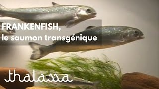 Documentaire Frankenfish, le saumon transgénique